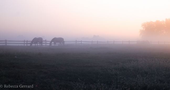 Morning fog in the New Jersey's Amwell Valley
